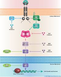 mapkinasesignaling  my cancer genome