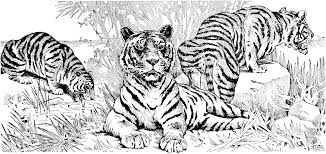 Small Picture Free Tiger Coloring Pages Tiger Coloring Page In Animals Coloring