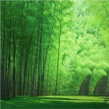 <b>beibehang</b> Backdrop <b>Interior Decorative</b> Mural Bamboo <b>Custom</b> ...