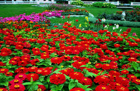 Small Picture Flower Garden Pictures Free Download Free Spring Wonder Fresh