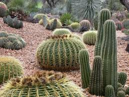 Small Picture High Desert Front Yard Landscaping landscaping ideas desert