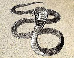 snake head drawings in pencil. Fine Drawings How To Draw Snake Step By Throughout Snake Head Drawings In Pencil R