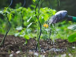 when to water plants the best time to