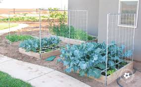 pipes and rope can create trellis