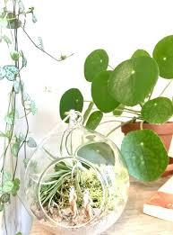air plant terrarium diy air plant terrarium kit diy hanging air plant terrarium kit