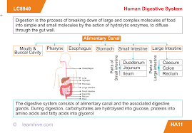 Human Digestive Enzymes Chart Learnhive Icse Grade 9 Biology Human Digestive System