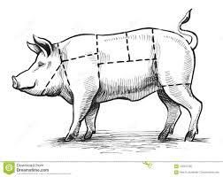 Pig Butcher Chart Art Butchers Chart Stock Illustration Illustration Of Chart