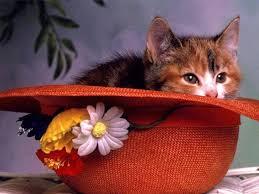 cute cat wallpapers free hd wallpapers of cute cat