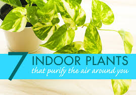 Small Picture 7 indoor plants that purify the air around you naturally