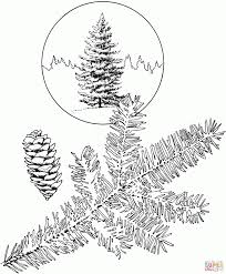 Small Picture Oregon State Tree Coloring Page Printable Pages Click The Of A
