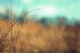 Blur Nature Background Hd Full Screen