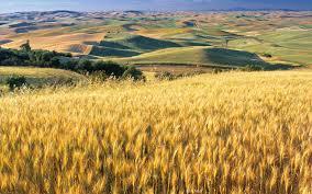 Resultado de imagen de cosechas fin de verano