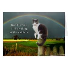 Loss Of A Cat Quotes Unique Pet Cat Loss Sayings Quotes