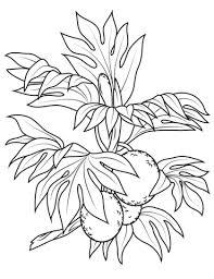 Disegno Di Ramo Con Frutto Dellalbero Del Pane Da Colorare