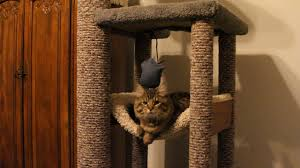Cat Playhouse Designs How To Diy Heavy Duty Cat Tree Tower Climber For A Maine Coon Cat