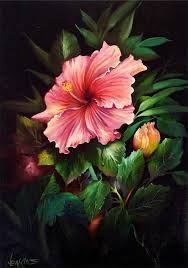 04 tropical pink hibiscus