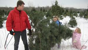 The Real Christmas Tree Experience  Emmerich Tree FarmEmmerich Christmas Tree Cutting Nj