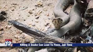 Georgia Snake Identification Chart State Laws Prohibit Killing Snakes In Georgia South Carolina