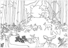 Coloring Pages Forest Animals Does And Fawns In Forest Deers Adult Coloring Pages
