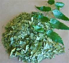 the history of the neem tree justneem neem leaves