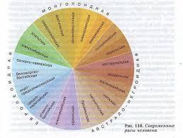 Расы и их происхождение Гипермаркет знаний Современные расы человека