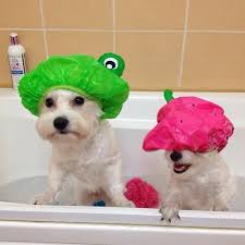 when giving your dog a bath put a shower cap on its head this will help prevent soap or shampoo from getting in their eyes and you from getting into a