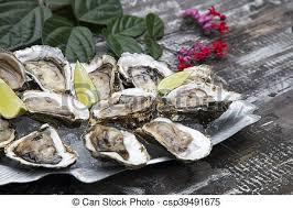Bildergebnis für Austern