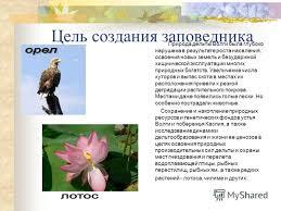 Презентация на тему Заповедники России Астраханский заповедник  4 Цель создания заповедника