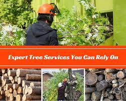 reliable tree services for jonesboro ar