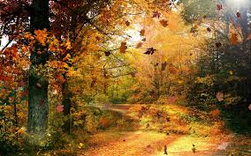 Image result for leaves wind