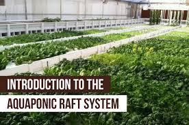 Floating Raft Aquaponics Design Introduction To The Aquaponic Raft System Upstart University