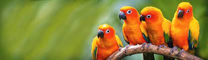 Bird Banner - Bird Background - Bird Images | Free Banners | Free Web  Headers