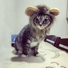 <b>dog</b> lion <b>mane</b>