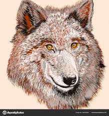 Drawn Wolf Fashion T Shirt Print With Vector Hand Drawn Wolf Stock Vector