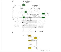 flowering time control and applications in plant breeding   full size image