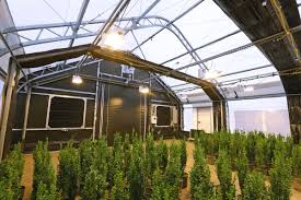 contact us for cans greenhouse