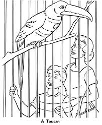 Small Picture Zoo Birds Coloring Pages Zoo Toucan Exhibit Birds Coloring Page