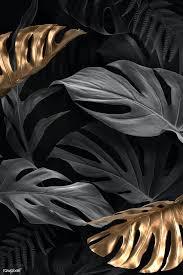 black Monstera Deliciosa leaves ...