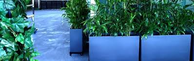 nerang urban trough with bamboo palms fox hotel brisbane cbd indoor plant hire benefits of plants brisbane office plants