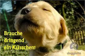 Viele Lustige Hundebilder Auch Zum Gratis Runterladen Alles Für