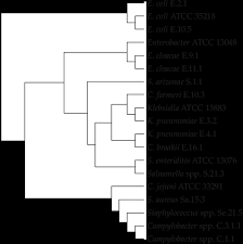 Dendrogram Of The Enterobacteriaceae Campylobacter And