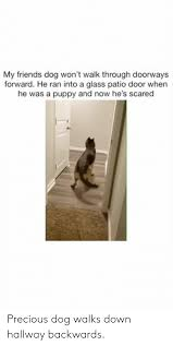 friends memes and precious my friends dog won t walk through doorways