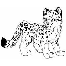 Snow Leopard Coloring Page Pages Chronicles Network