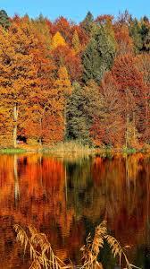 Aesthetic Fall Leaves Wallpaper ...