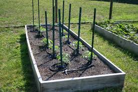 garden soaker hose. Photo 1 Of 7 Tomato Plants With Soaker Hose. (delightful Garden Hose #1) Jualairsoftgunmurah.com