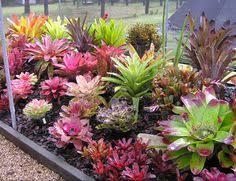 Small Picture Bromeliad garden Bromeliads in Australia Bromeliads XIII