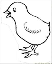 Small Picture Top 66 Chick Coloring Pages Free Coloring Page
