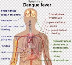 a short essay about dengue words world education notes a short essay about dengue 560 words