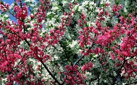 Spring in Flower Windows 7 Flowers ...