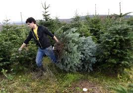 Christmas Tree Farms In New JerseyChristmas Tree Cutting Nj